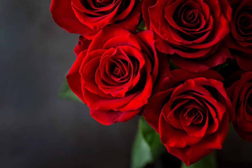 Romantic bouquet of red roses