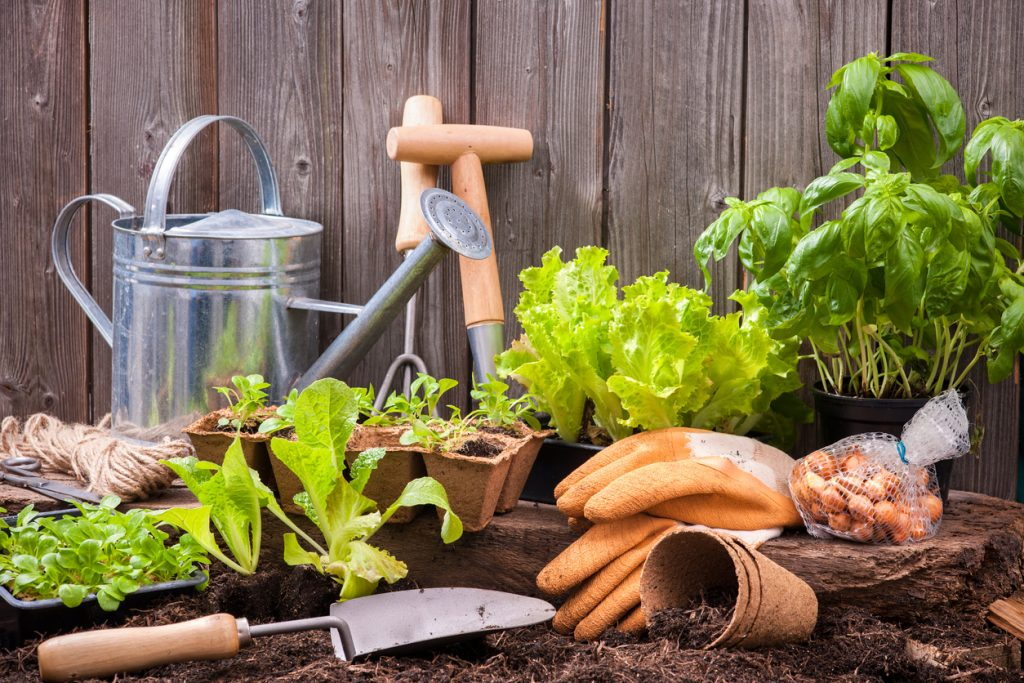 Gardening essentials from plant nursery